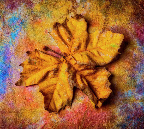 Wall Art - Photograph - Weathered Worn Autumn Leaf by Garry Gay