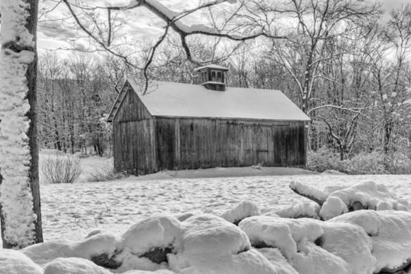 Photograph - Weathering Winter Bw by Bill Wakeley
