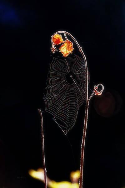 Photograph - Web by Bob Orsillo