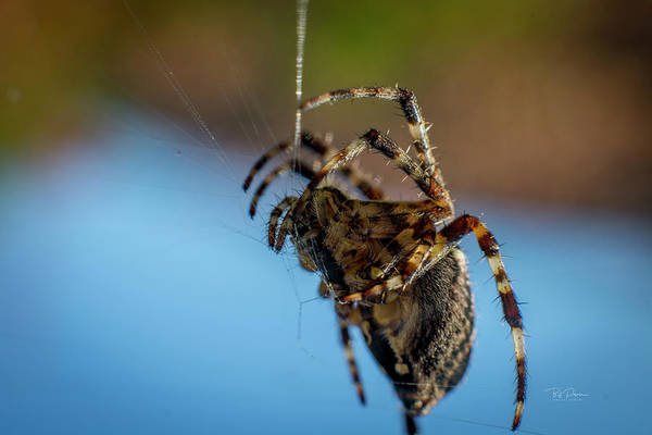 Photograph - Web Building by Bill Posner