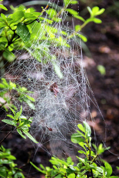 Wall Art - Photograph - Web Of Mystery by Teresa Mucha