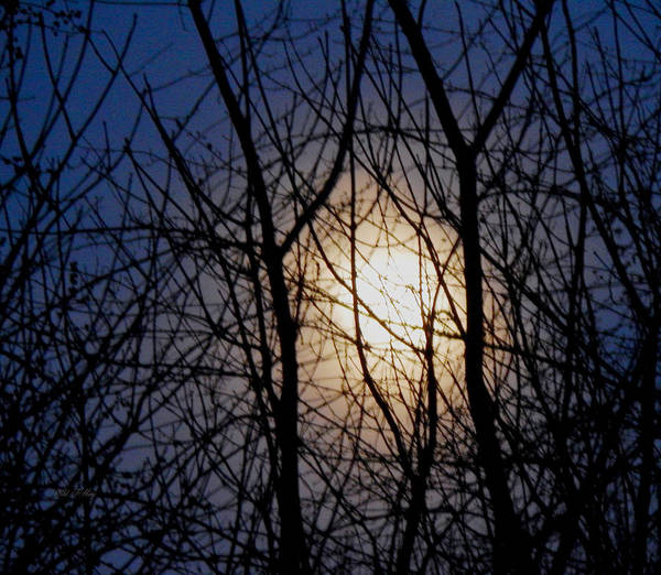 Photograph - Webbed Moonrise by Wild Thing