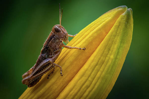 Wall Art - Photograph - Weed Hopper by Paul Freidlund