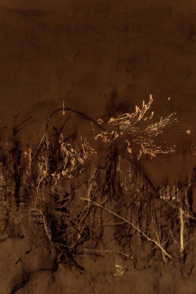 Photograph - Weed Writing by Deborah Hughes