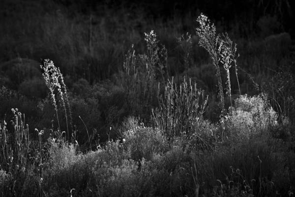 Photograph - Weeds 5 by Catherine Sobredo