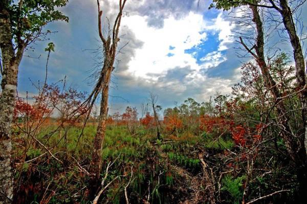 Alabama Painting - Weeks Bay Swamp by Michael Thomas