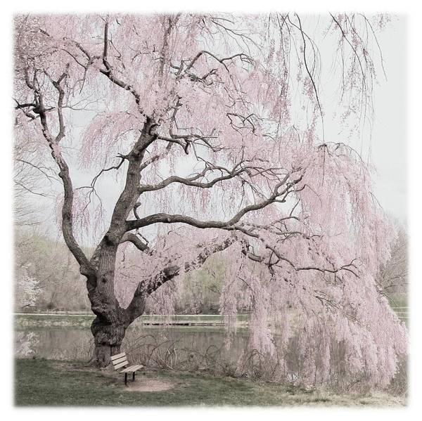 Photograph - Weeping Spring 2 - Holmdel Park by Angie Tirado
