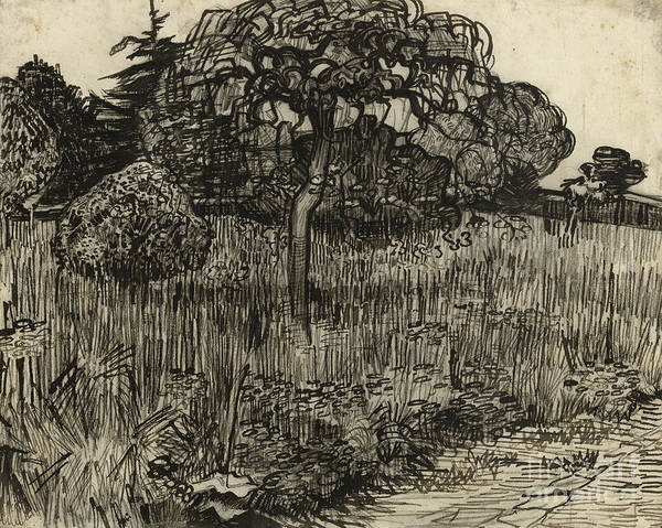Grass Field Drawing - Weeping Tree by Vincent Van Gogh