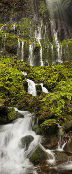Queens Bath Photograph - Weeping Wall Kauai Rainforest Waterfall by Sun Gallery Photography Lewis Carlyle