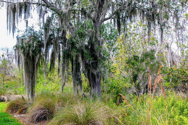 Wall Art - Photograph - Weeping Willow  by Madeline Ellis