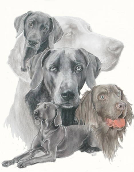 Mixed Media - Weimaraner W/ghost by Barbara Keith