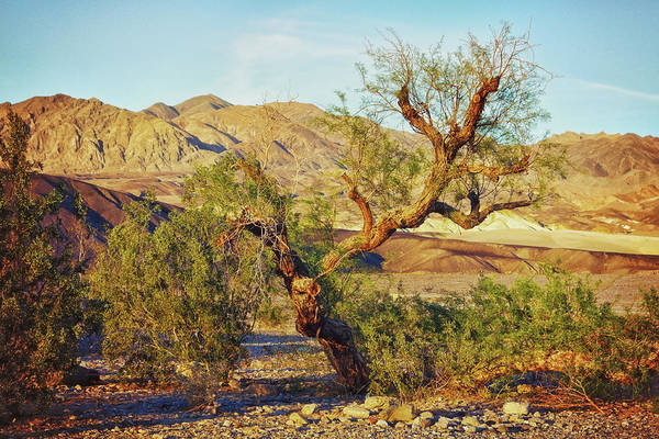 Photograph - Weird Tree In Death Valley by Tatiana Travelways