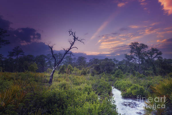 Photograph - Wekiwa Springs State Park by Tim Wemple