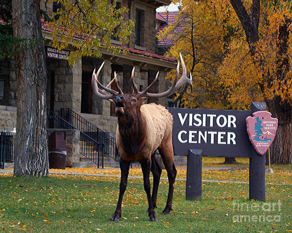 Photograph - Welcome Bugle  by Katie LaSalle-Lowery