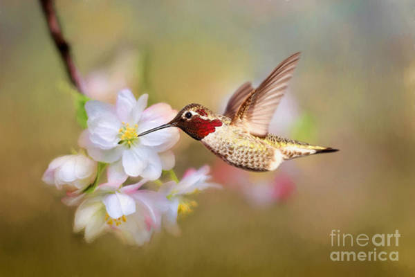 Beautiful Hummingbird Photograph - Welcome Spring by Darren Fisher
