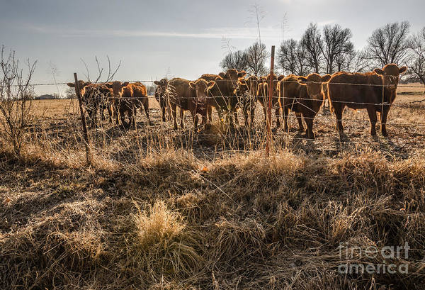 Photograph - Welcoming Committee by Sue Smith
