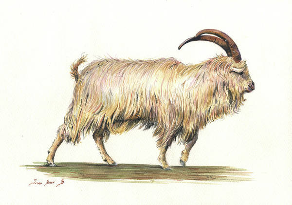 Wall Art - Painting - Welsh Long Hair Mountain Goat by Juan Bosco