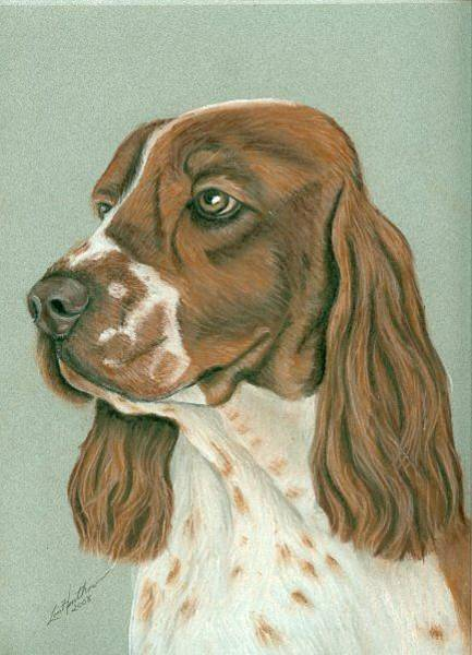 Welsh Springer Spaniel Painting - Welsh Springer Spaniel  by Linda Henthorn