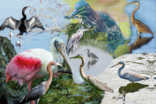 Digital Art - Welter Of Waterbirds by Gene Norris
