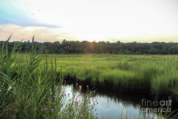 Wall Art - Photograph - West Creek Sunset by Colleen Kammerer