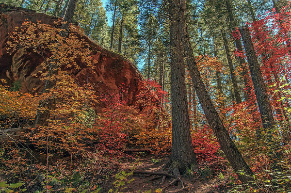 Photograph - West Fork Fall Color 0212-102814-2 by Tam Ryan