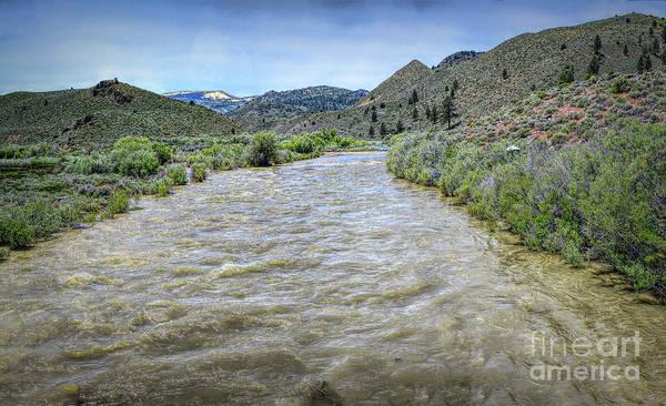 Photograph - West Walker River by Joe Lach