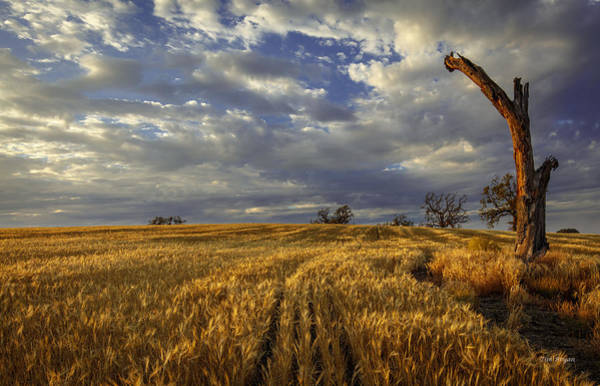 Photograph - West Wind by Tim Bryan