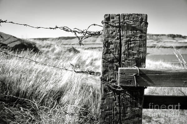 Photograph - Western Barbed Wire Fence Black And White by Carol Groenen