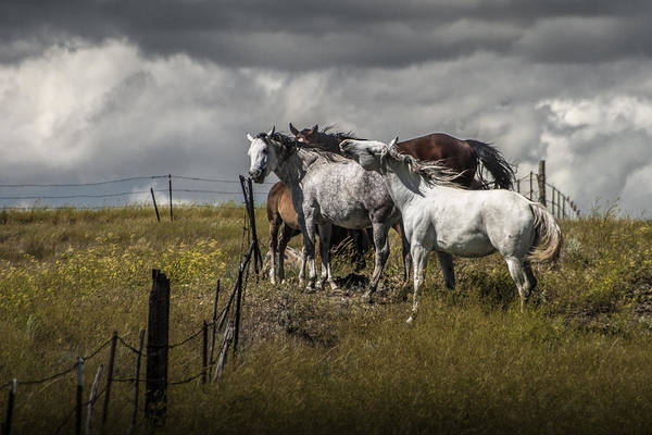 Steed Photograph - Western Horses By The Pasture Fence by Randall Nyhof