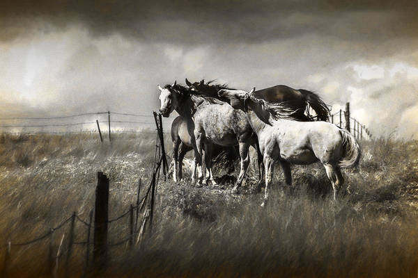 Steed Photograph - Western Horses In A Toned Graphic Photograph by Randall Nyhof