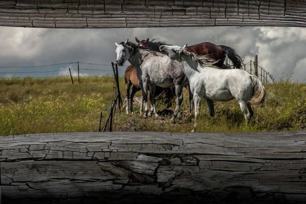 Steed Photograph - Western Horses Through The Fence by Randall Nyhof