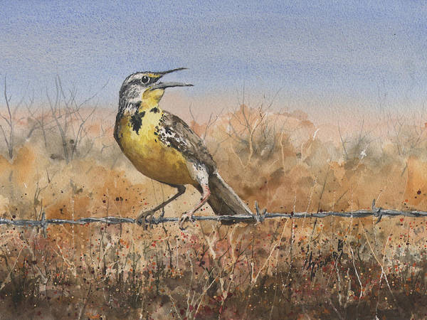Meadowlark Painting - Western Meadowlark by Sam Sidders