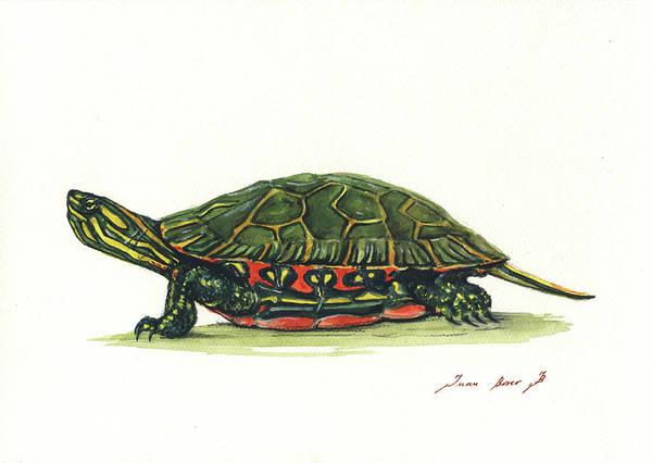 Paint Painting - Western Painted Tortoise by Juan Bosco