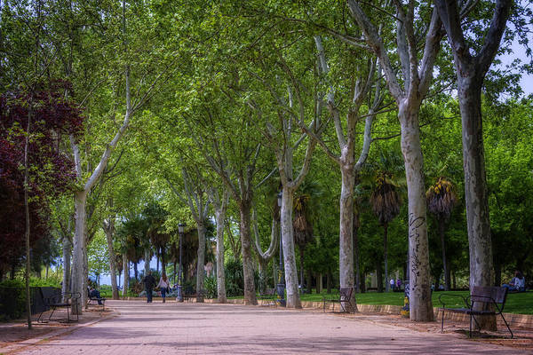 Photograph - Western Park Madrid by Joan Carroll