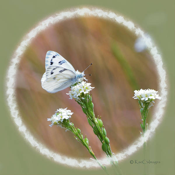 Mixed Media - Western White Butterfly by Kae Cheatham