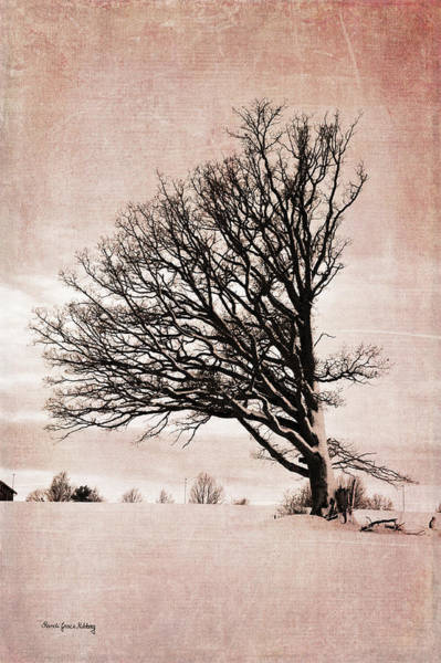 Photograph - Western Wind by Randi Grace Nilsberg
