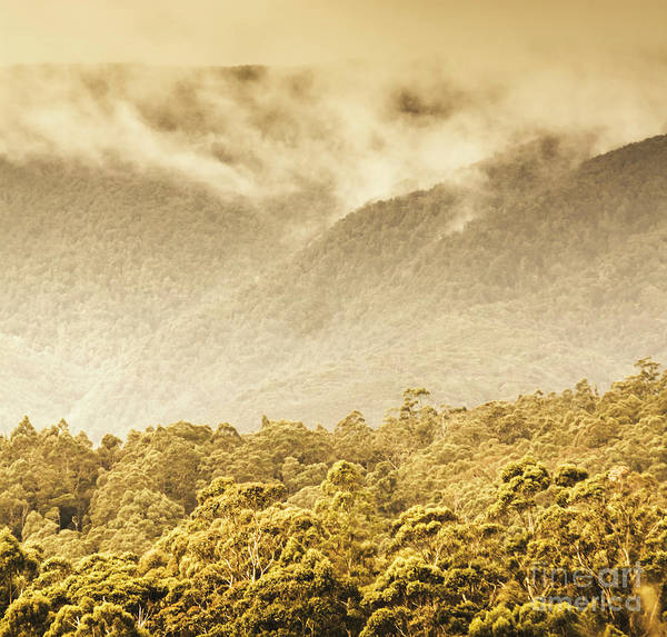 Photograph - Western Woodlands by Jorgo Photography - Wall Art Gallery