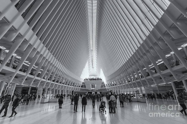 Photograph - Westfield World Trade Center Viii by Clarence Holmes