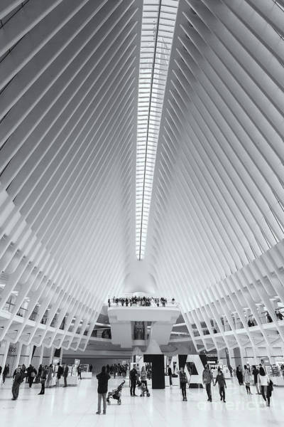 Photograph - Westfield World Trade Center X by Clarence Holmes