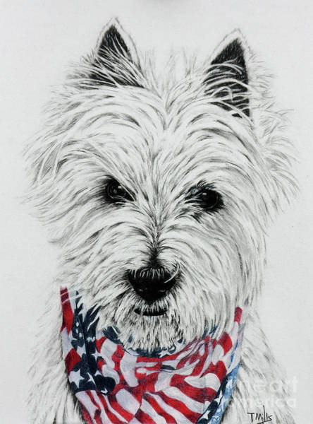 Furry Drawing - Westie by Terri Mills