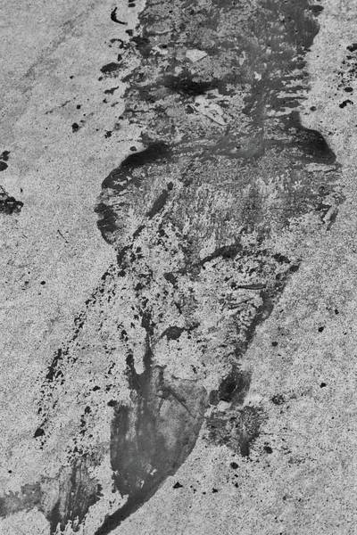 Photograph - Wet Outline Of Gator by Cynthia Guinn
