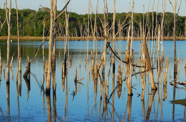 Photograph - Wet Timbers - Manasquan Reservoir by Angie Tirado