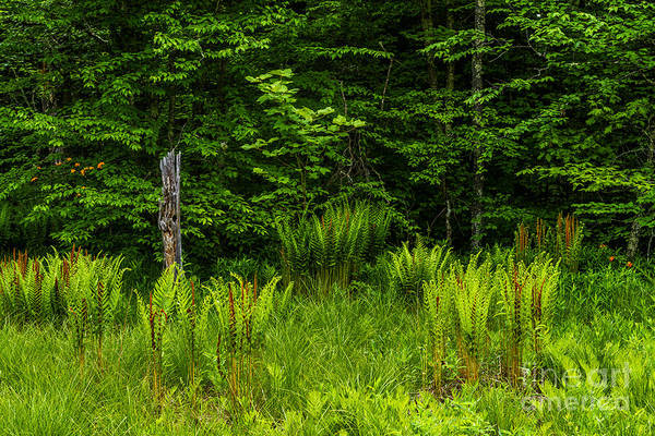 Highland Scenic Highway Wall Art - Photograph - Wetland And Woodland by Thomas R Fletcher