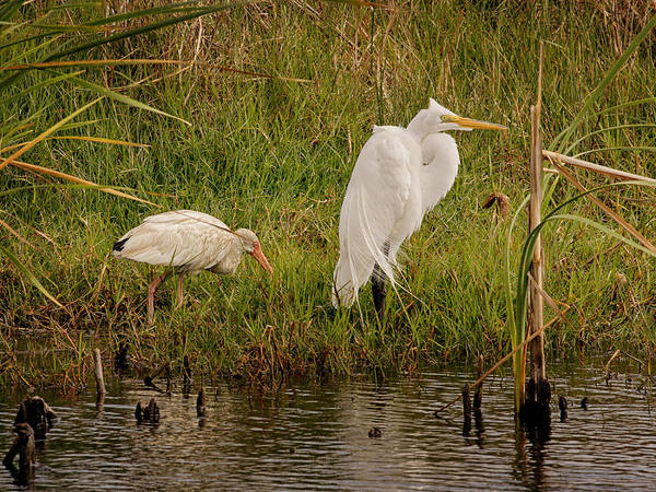 Photograph - Wetland Birds by Charles McKelroy