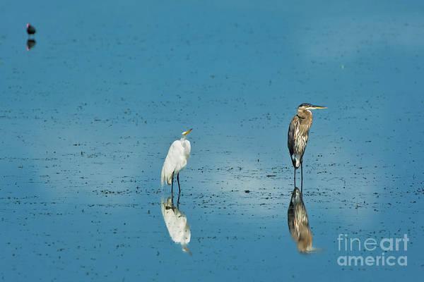 Photograph - Wetland Friends by Patrick M Lynch