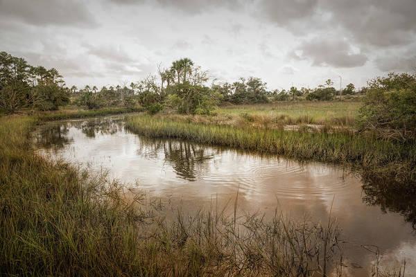 Photograph - Wetland Habitat by John M Bailey