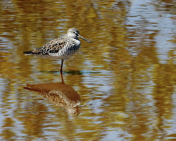 Photograph - Wetland Reflections by Dawn Currie