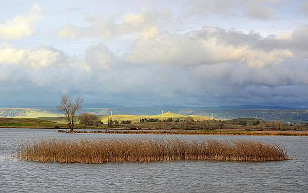 Photograph - Wetlands by AJ Schibig