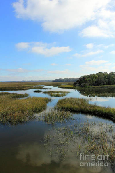 Photograph - Wetlands At Spanish Pond by Jennifer Robin