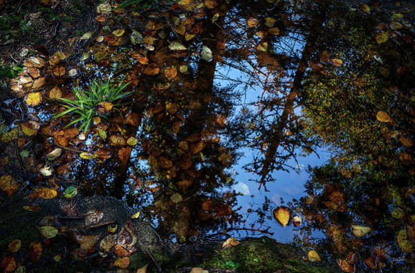 Photograph - Wetlands by Doug Gibbons